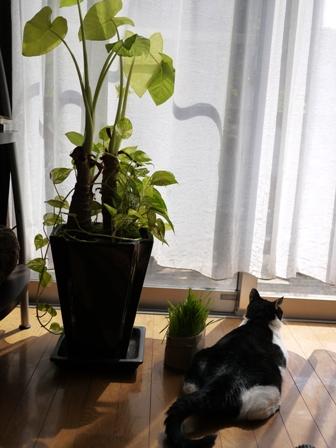 猫のお友だち じょあんちゃんはんくすちゃん編。_a0143140_19532399.jpg