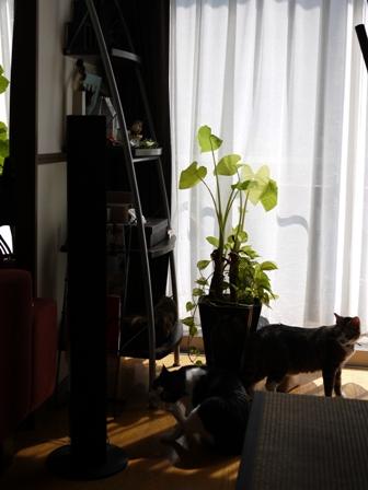 猫のお友だち じょあんちゃんはんくすちゃん編。_a0143140_19563984.jpg