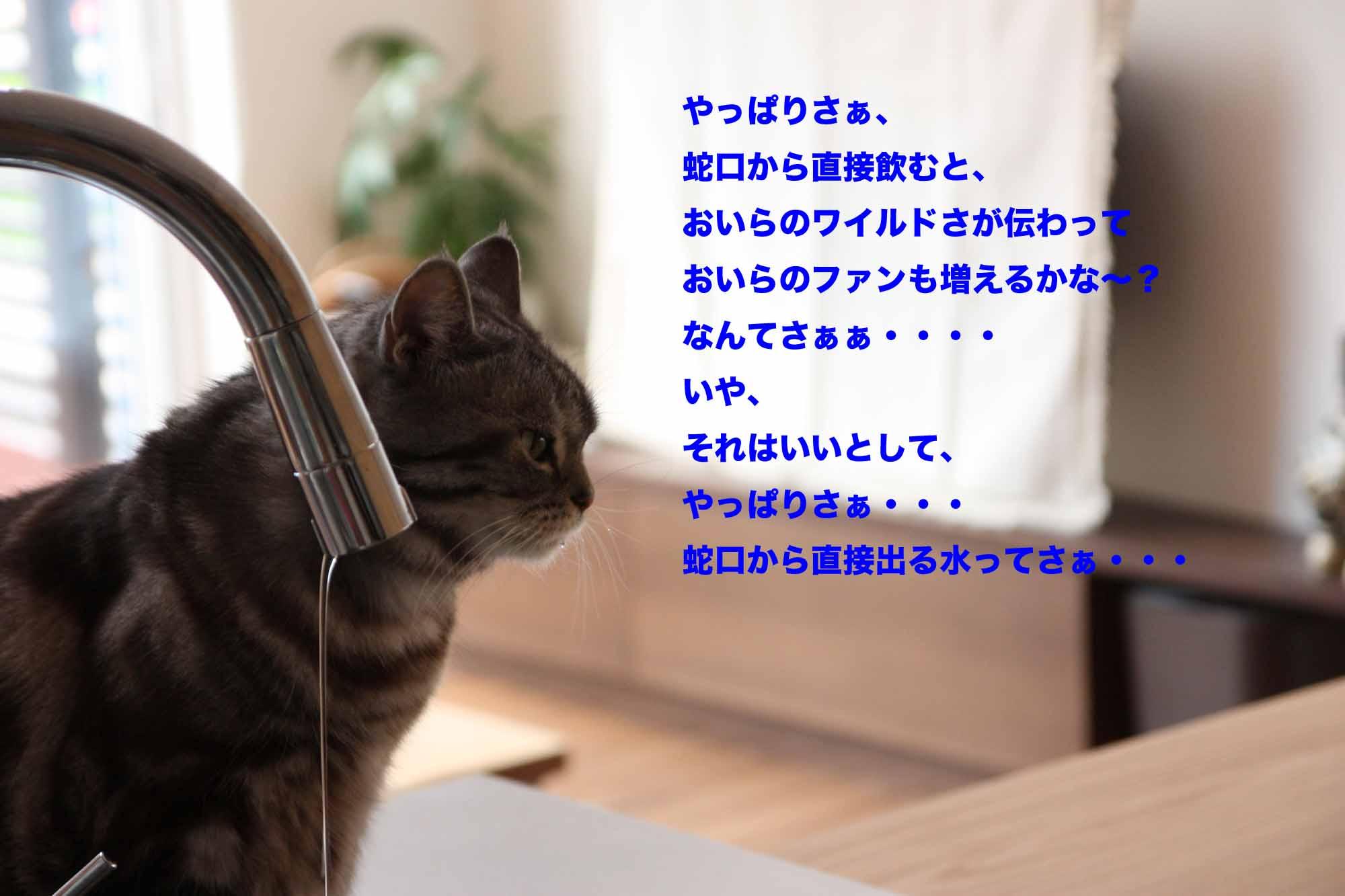 b0223446_6305263.jpg