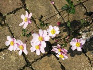 しゅうめい菊の季節_b0115553_1052829.jpg