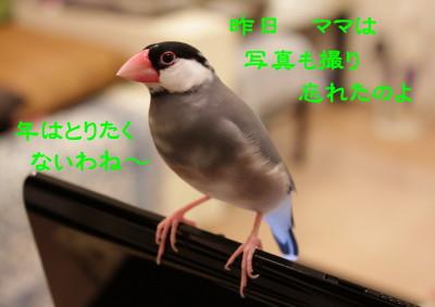 b0158061_20413584.jpg