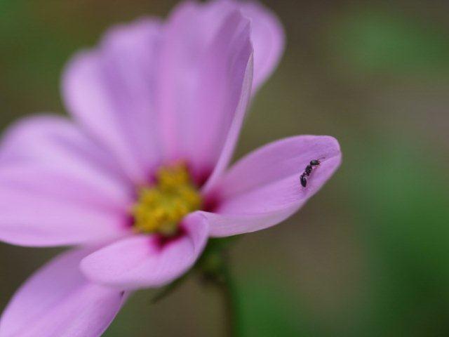 季節の花 マンションの花壇にお邪魔しました_b0175688_1638187.jpg