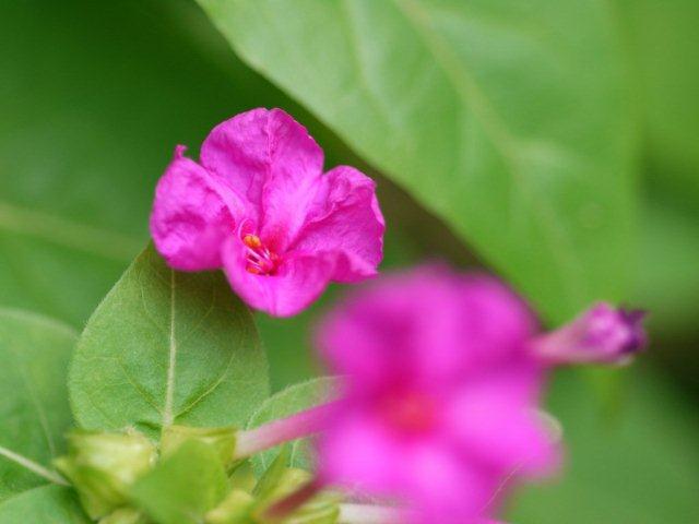 季節の花 マンションの花壇にお邪魔しました_b0175688_1921451.jpg