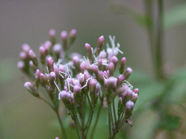 季節の花 マンションの花壇にお邪魔しました_b0175688_19284899.jpg