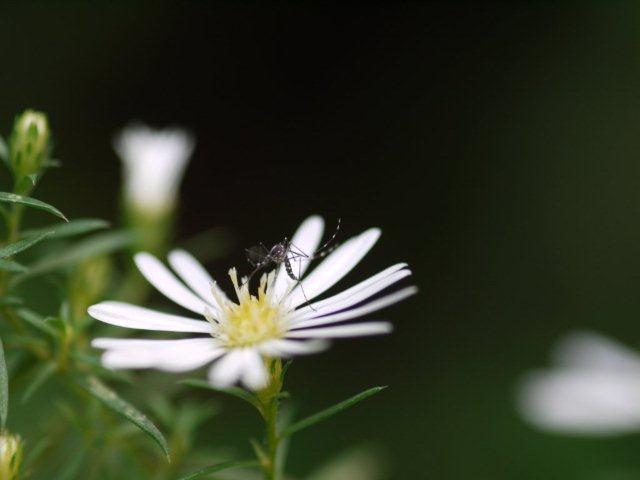 季節の花 マンションの花壇にお邪魔しました_b0175688_19311530.jpg