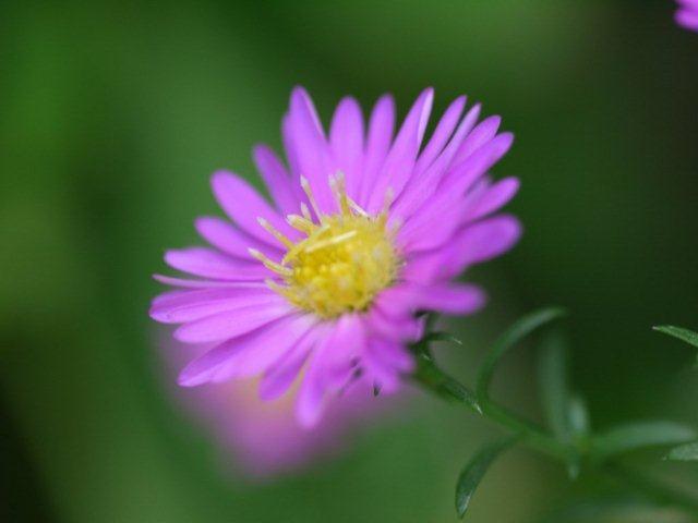 季節の花 マンションの花壇にお邪魔しました_b0175688_19313360.jpg