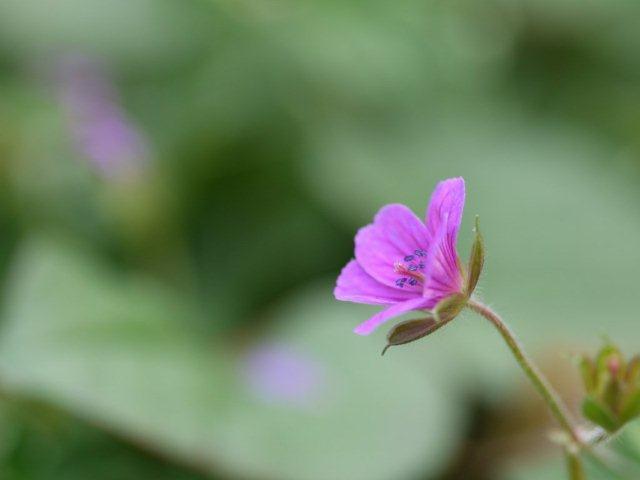 季節の花 マンションの花壇にお邪魔しました_b0175688_20424120.jpg