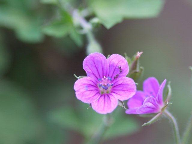 季節の花 マンションの花壇にお邪魔しました_b0175688_20425864.jpg
