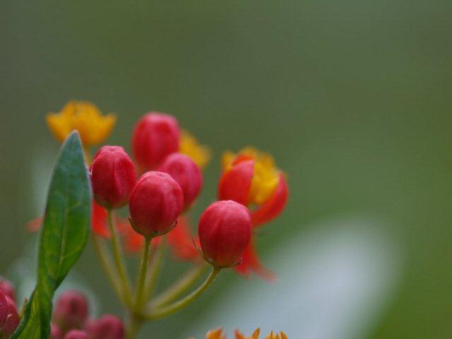 季節の花 マンションの花壇にお邪魔しました_b0175688_2047143.jpg