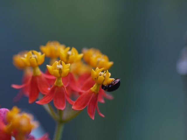 季節の花 マンションの花壇にお邪魔しました_b0175688_20471522.jpg