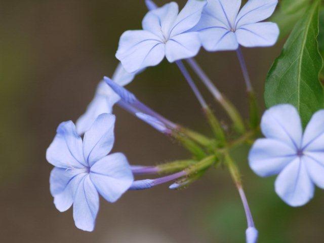 季節の花 マンションの花壇にお邪魔しました_b0175688_20481630.jpg