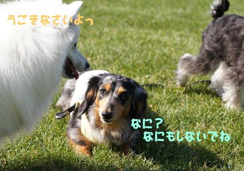 f0195891_1753325.jpg