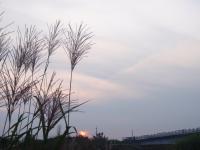 年1ミリシーベルト超す汚染、8都県で国土の3%_d0235522_22304942.jpg