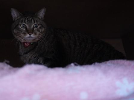 猫のお友だち 珊瑚ちゃん祿太くん編。_a0143140_22332143.jpg