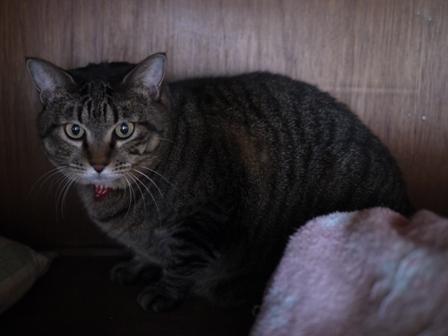 猫のお友だち 珊瑚ちゃん祿太くん編。_a0143140_22335865.jpg