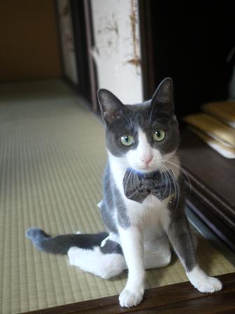 猫のお友だち 珊瑚ちゃん祿太くん編。_a0143140_22361042.jpg
