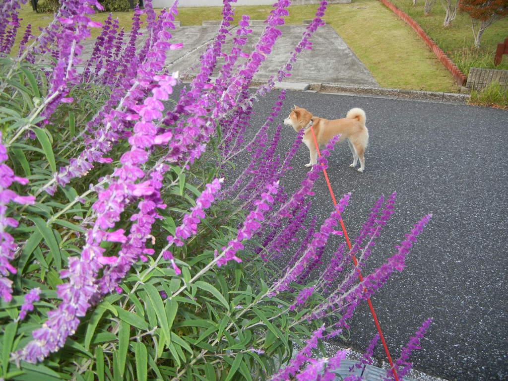 2011年10月11日(火)お外が気持ちいい季節!_f0060461_10335591.jpg
