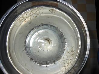 淡水にもクラゲが…_e0175370_2281097.jpg