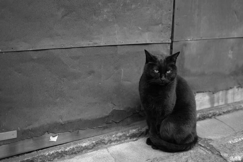 「黒猫」_a0133692_15251682.jpg