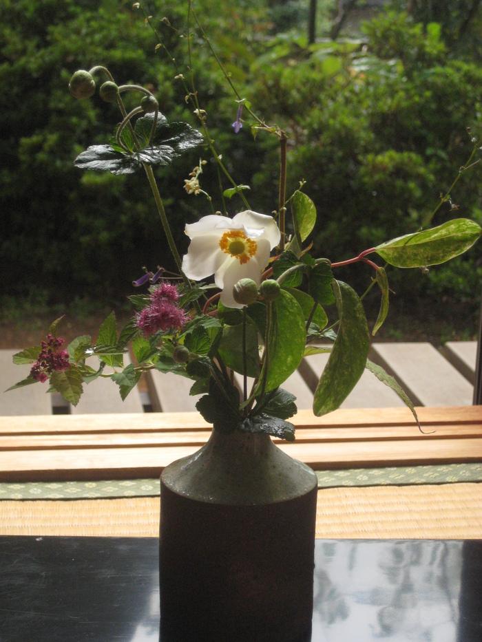 花を触ること_a0233896_16455246.jpg