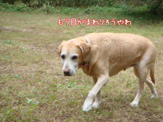 f0064906_1945781.jpg