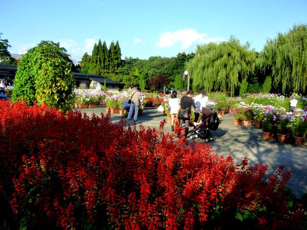植物園 秋景色_e0048413_18544511.jpg