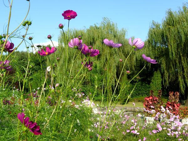植物園 秋景色_e0048413_18545927.jpg