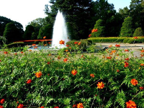 植物園 秋景色_e0048413_18552382.jpg