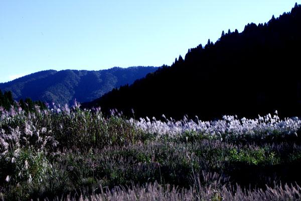 朽木の生杉 秋景色_e0048413_21263848.jpg