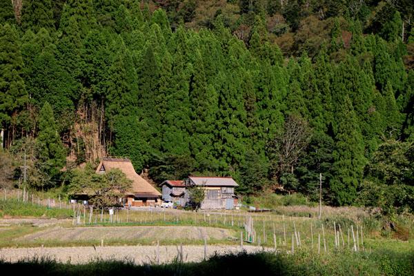 朽木の生杉 秋景色_e0048413_21271865.jpg