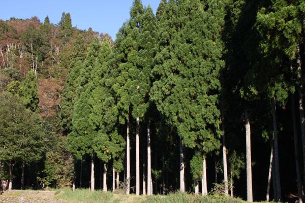 朽木の生杉 秋景色_e0048413_21274889.jpg