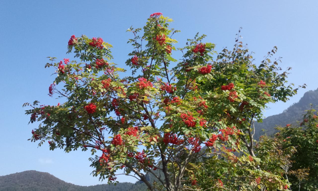 氷ノ山の紅葉が始まりましたよーッッ!_f0101226_712150.jpg