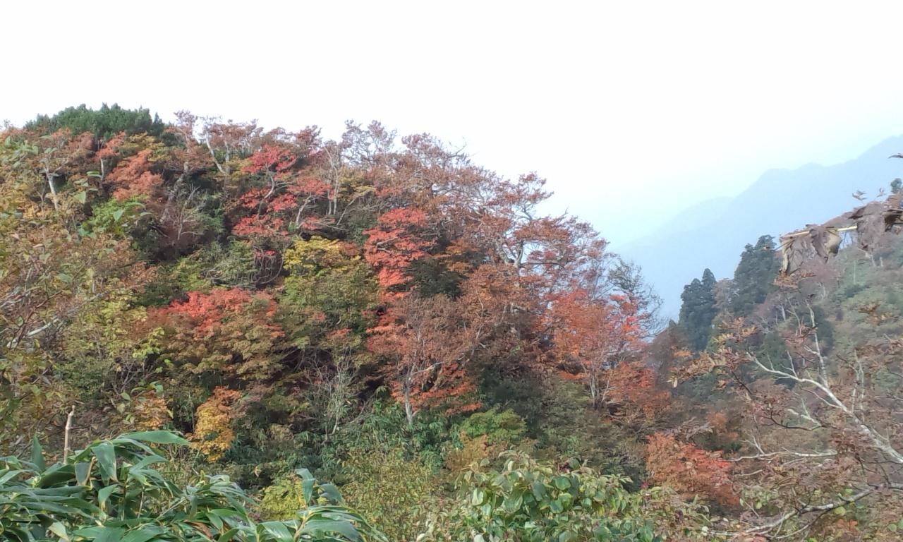 氷ノ山の紅葉が始まりましたよーッッ!_f0101226_79132.jpg