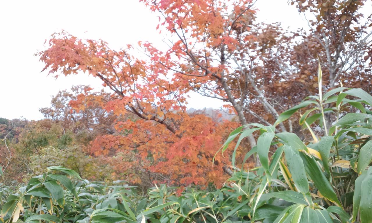 氷ノ山の紅葉が始まりましたよーッッ!_f0101226_795032.jpg