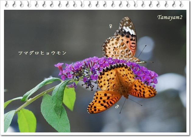 c0128628_23534966.jpg