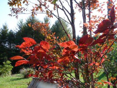 紅葉の秋_f0019247_14404328.jpg