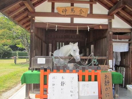 上賀茂神社_f0205367_1904869.jpg