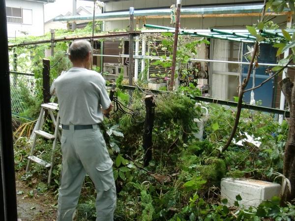 大容量の倉庫 ~ 植木の伐採_d0165368_7183551.jpg