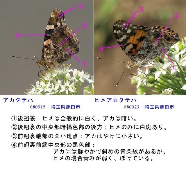 a0146869_6232698.jpg