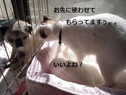 c0139488_16505515.jpg