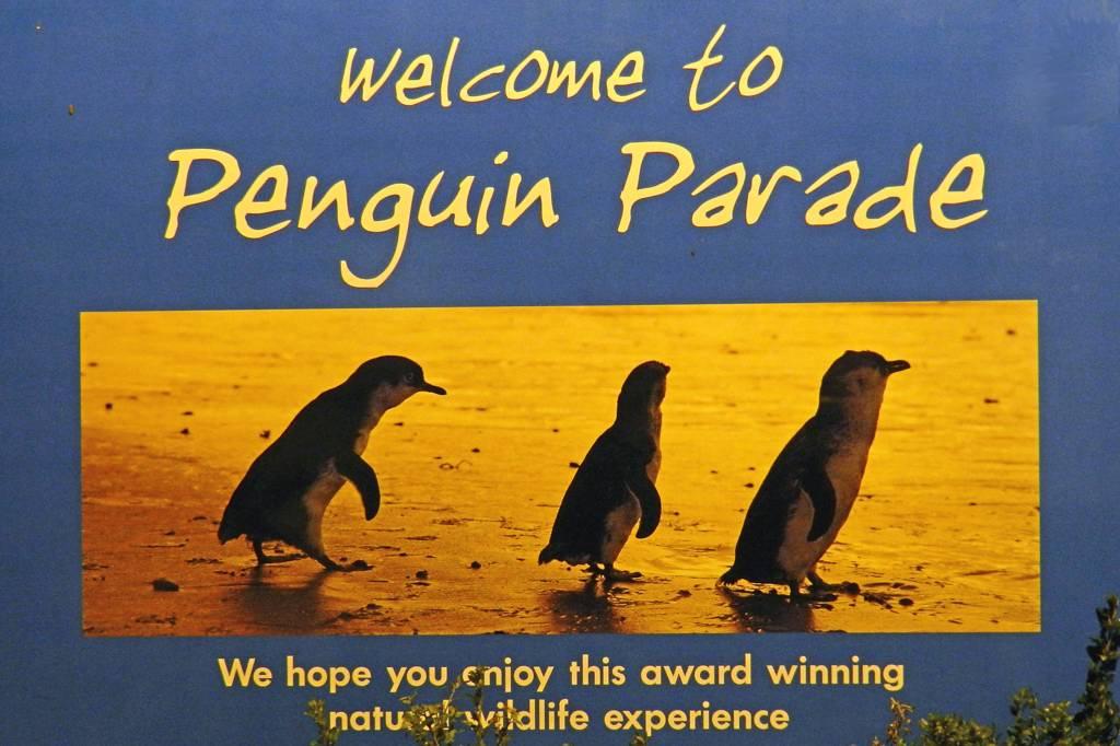 ペンギンパレード見物/お月見ポイント_b0024798_922752.jpg