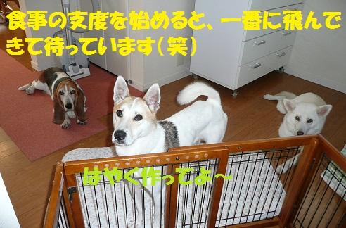 f0121712_14502655.jpg