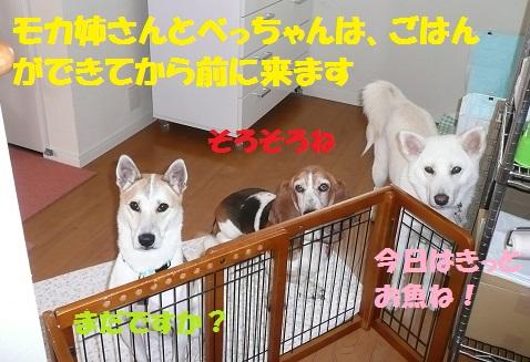 f0121712_14503595.jpg