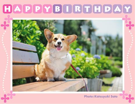 アインちゃん、お誕生日おめでとう♪_d0102523_1020341.jpg