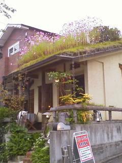 屋根の上のコスモス_c0038434_17263142.jpg