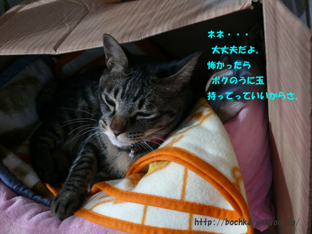 a0157646_1591541.jpg