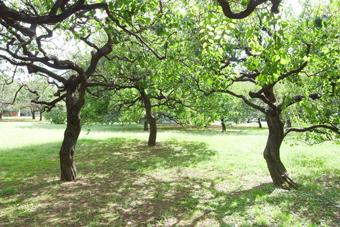 近所の砧公園_a0184348_1649473.jpg