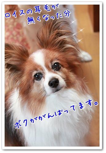 d0013149_2318507.jpg