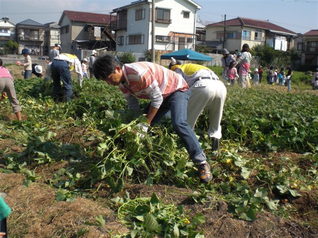 サツマイモの収穫_f0079749_20345672.jpg