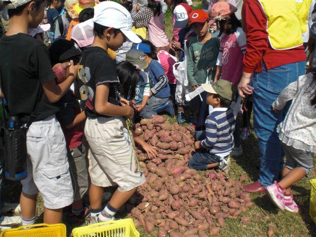 サツマイモの収穫_f0079749_2142517.jpg
